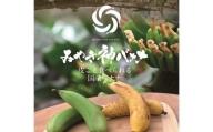 CR002 【国産バナナ】みやき神バナナ5本セット(樅箱入り)