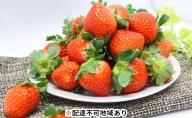 【ご家庭用】岡山県産 いちご(さがほのか)約2kg(約250g×8パック)【配達不可:北海道・沖縄・離島】