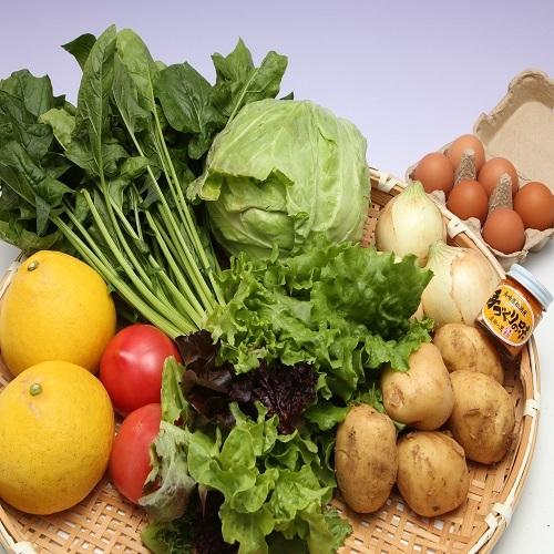【A5-007】道の駅松浦海のふるさと館『旬のお野菜+産みたて濃厚玉子6個』の大満足セット!