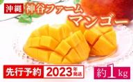 【2021年発送】神谷ファームのマンゴー約1Kg