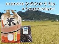 【2636-5026】令和2年産!ひのひかり5kgと黒米200gセット(奈良県香芝市産)