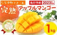 【2021年発送】しらかわファームの完熟アップルマンゴー約1kg