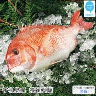 愛媛県産養殖真鯛フィレ2枚(お頭付き・冷凍)お刺身で!焼いて!煮て食べ鯛! 新鮮・安心