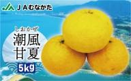 JAの夏みかん「潮風甘夏」約5kg[B2222]