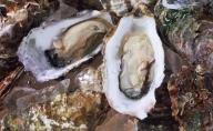 オホーツクサロマ産カキ約2.0kg(20個前後)2年貝殻付き