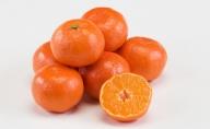 香川県オリジナル品種 小原紅早生みかん(金時紅)約2.5kg化粧箱入