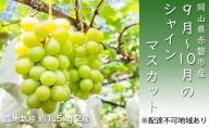 赤磐市産 シャインマスカット 約1.5kg 2房 露地栽培