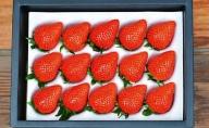 【贈答用】滋賀県湖南市産 摘みたて完熟いちご 約450g