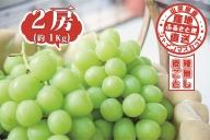 【2021年発送】山梨県産 シャインマスカット 2房(約1kg)