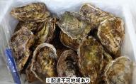 丸十水産 広島ブランド 牡蠣 【かき小町】殻付20個