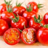 D−182.1年に水やり1度のみ【極】ドトマト