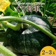 AE157ホクホク甘い! 長崎県産 くりかぼちゃ 「くり将軍」 約5kg(2~3玉)