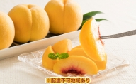 桃茂実苑 岡山黄金 桃 1.5kg