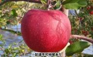 【2021年分先行予約】長野市産サンふじ5kg(贈答品)