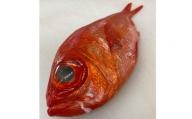 a15-443 金目鯛一匹 約700g~800g 刺身用 煮つけ用 処理済