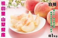 【2021年発送】 山梨県産  完熟桃 白桃系 約1kg(2~5玉)