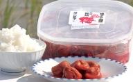 越中伝統梅干し 氷見稲積梅(1kg)