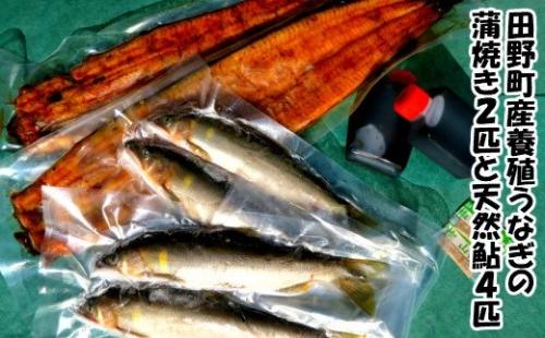 田野町産うなぎの蒲焼き2匹と天然鮎4匹セット   au PAY ふるさと納税