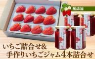 紅ほっぺ いちご詰合せデラックス(1トレー入り)&無添加の手作りいちごジャム(4本詰合せ)