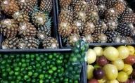【2021年発送】南国フルーツ 定期便B ☆3ヵ月定期便 フルーツ 合計4種類
