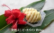 【2021年発送】ちゅら西表島産!!完熟 ミニ ピーチパイン 約3.5kg