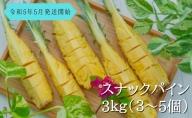 【2021年発送】☆『ちぎる派!?切る派!?』☆ スナックパイン 約3kg(3~5個入)