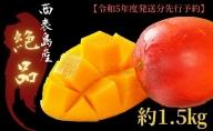 2021年発送『プレミアムな美味しさ』アップルマンゴー 約1.5kg