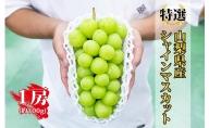 【特選】 山梨県産 大房シャインマスカット1房(約700g)