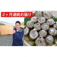 【2ヶ月連続】菌床による、生シイタケで「おーい菌床しいたけ」1kg×2ヶ月