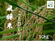 飛騨の米 コシヒカリ 10kg こだわり農家 令和2年産 地場産市場ひだ[Q401]