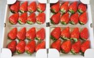 【2021年3月1日以降順次発送】寒蜜いちご 紅ほっぺ 4パック(300g×4)