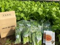 (チルド) 山口農園 有機野菜 おまかせセット+カレー2箱 詰合せ/ オーガニック レトルトカレー