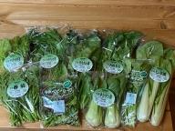 (チルド) 山口農園 有機野菜 おまかせセット / 有機野菜 伝統野菜 オーガニック ベジタリアン