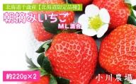北海道千歳産 【北海道限定品種】朝摘みいちごML混合 約220g×2