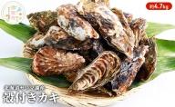 北海道サロマ湖産 カキ約4.7kg