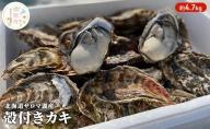 神栄 北海道サロマ湖産 カキ約4.7kg
