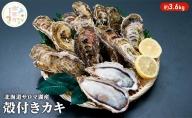 北海道サロマ湖産 カキ約3.6kg