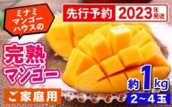 【2021年発送・家庭用】ミナミマンゴーハウスの完熟マンゴー 約1kg