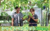 水田農園シャインマスカット(北海道仁木町産)
