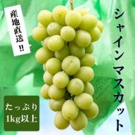 【磐梯町産希少】シャインマスカット1kg以上